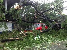 typhoon glenda a